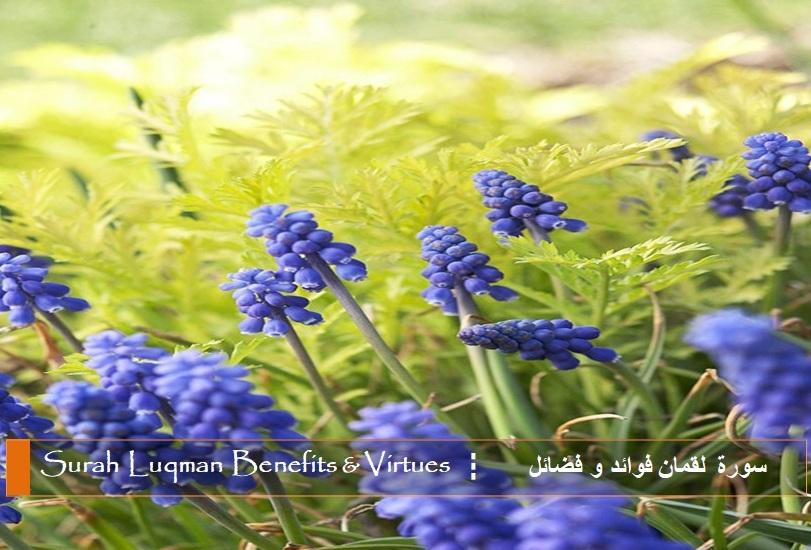 virtues-benefits-surah-luqman