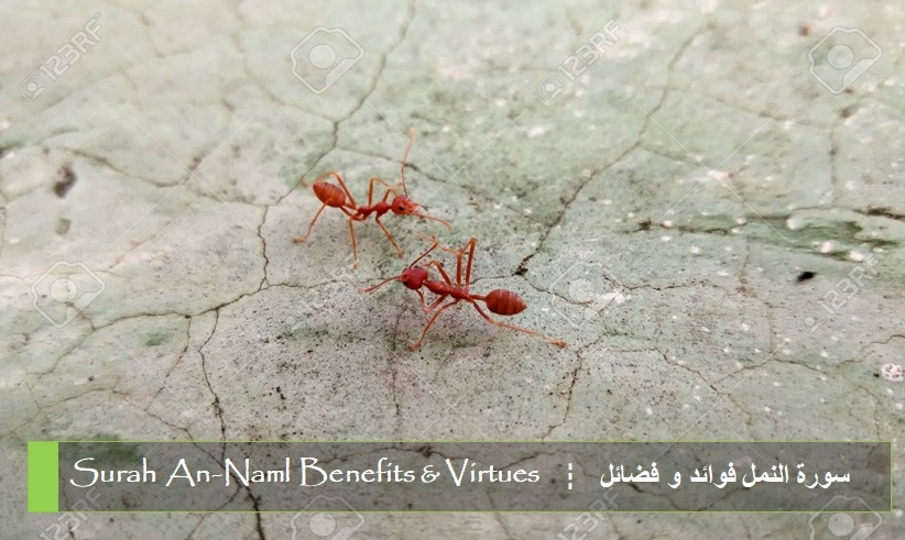 virtues-benefits-surah-an-naml