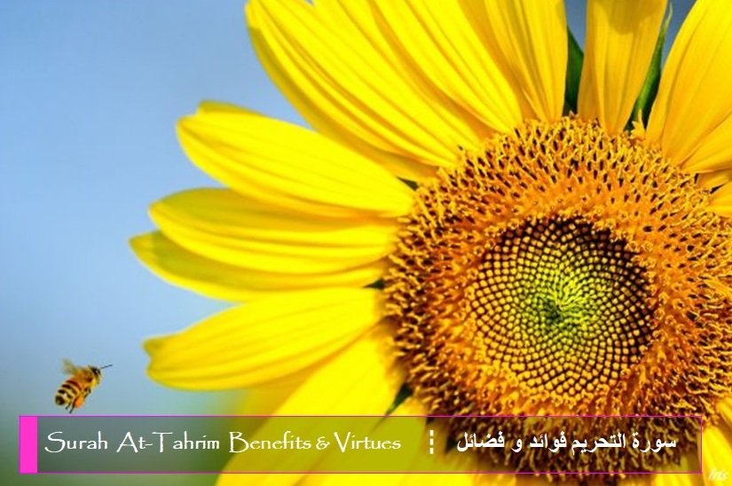 virtues-benefits-surah-at-tahrim
