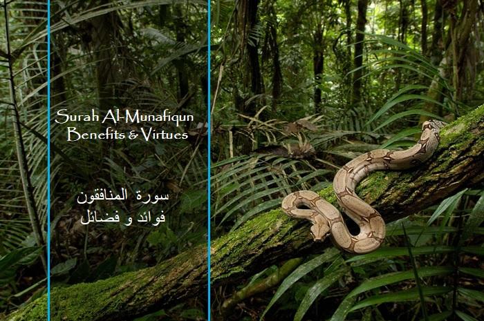 virtues-benefits-surah-al-munafiqoon