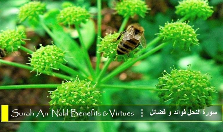 virtues-benefits-surah-an-nahl